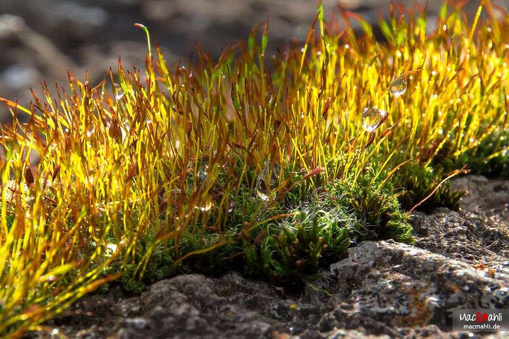 Moisty moss with sunshines koss… ahm, kiss!